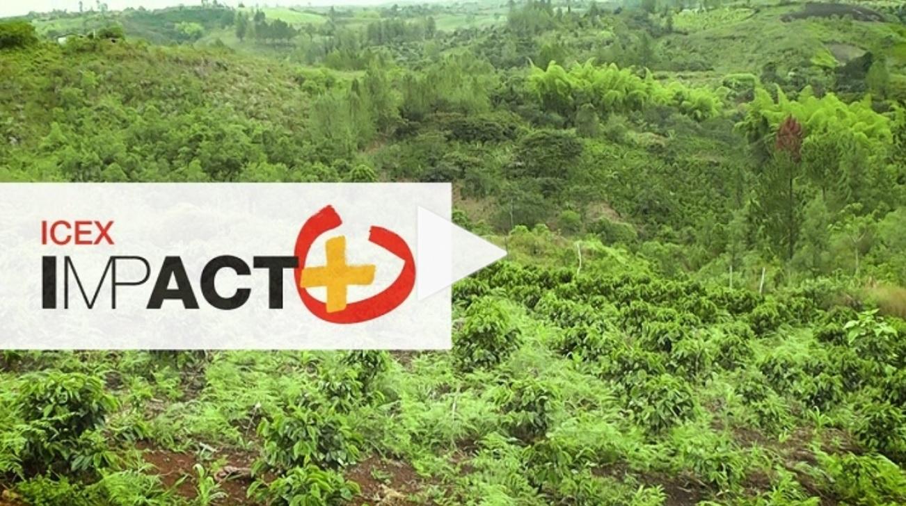 Negocios sostenibles y rentables con ICEX Impacto Positivo